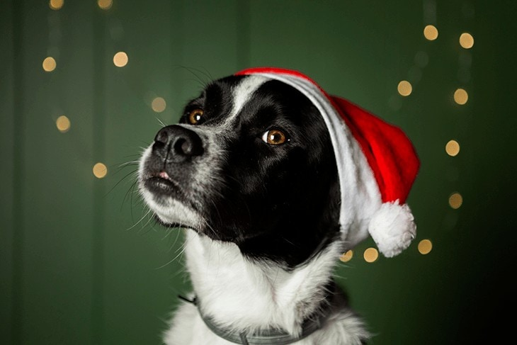 Cute dog wearing santa hat