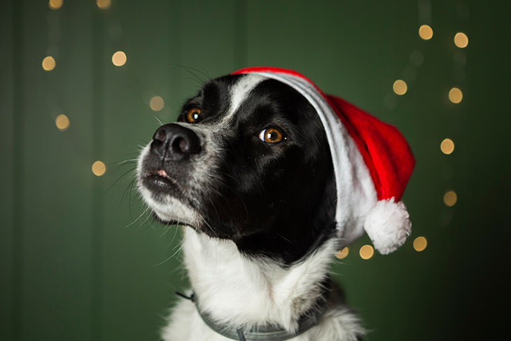 Cut dog wearing santa hat