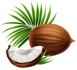 coconut benefits