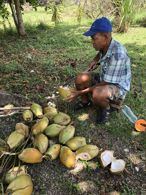breaking a coconut for coconut water