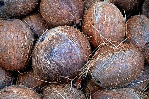 brown coconuts pilled up
